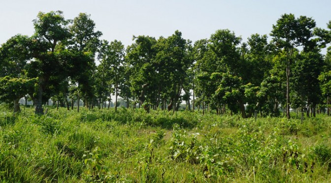 Development of Dhanushadham Protected Forest as a Biological Unit