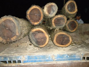Uploaded Logged Trees in Tractor after recovering from pond.