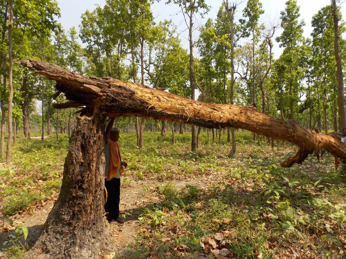 natural calamity The world's worst natural disasters have claimed many lives and have caused  millions in property damage while there are many criteria as to.