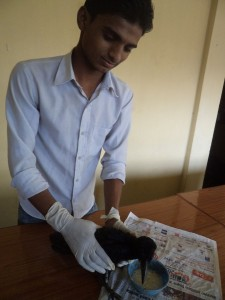Social Mobiliser Mr.Mukesh feeding Injured Crow