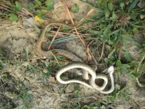 Faith of A Speechless creature among Human beings. Killed Cat Snake