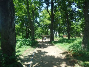 Way to Mini Zoo in Dhanushadham Protected Forest