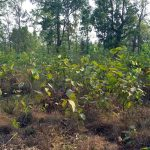 Natural Germination inside Dhanushadham Protected Forest