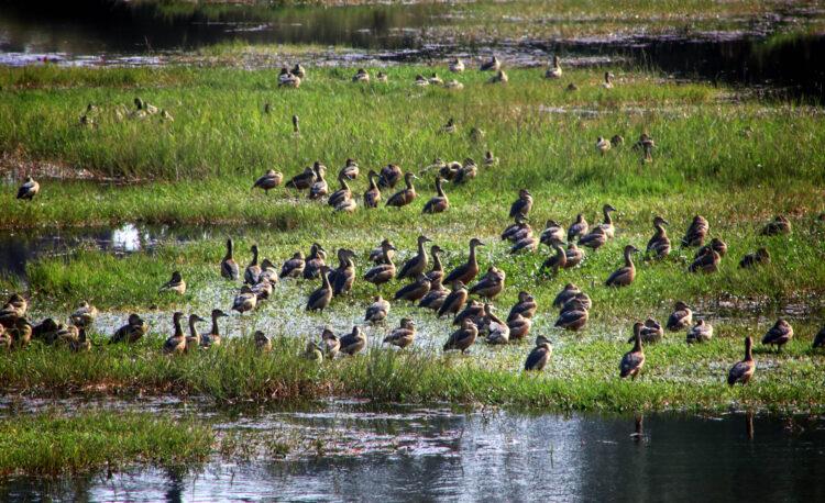 Flock-of-birds-at-DPF